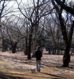 JAN-10-2005-YOYOGIPARK3