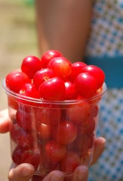 Cherry10