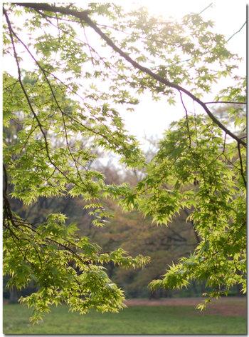 Midorimomijiapr20071_2