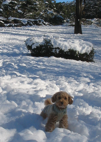 snowdog1