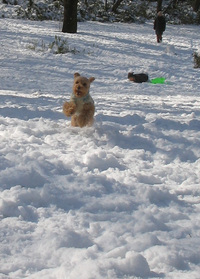 snowdog3
