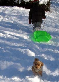 snowdog5jpg
