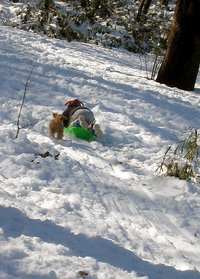 snowdog7