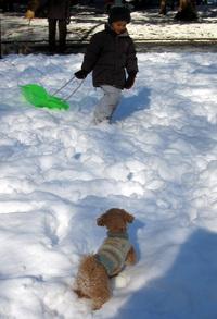 snowdog8